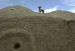 Афганская борзая на вершине холма