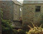 Эрдельтерьер на крыше