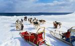 Аляскинский кли-кай и сани