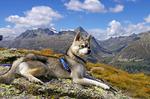Аляскинский кли-кай в горах