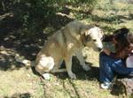 Собака гампр и девочка