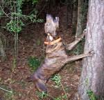 Древесная теннессийская тигровая собака лает