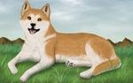 Красивый рисунок акита-ину