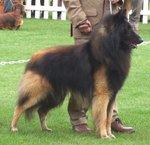 Бельгийская овчарка Тервюрен со своим хозяином