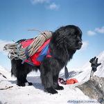 Храбрая московская водяная собака