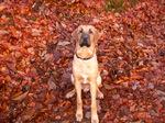 Брогольмер на листьях