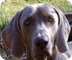 Собака Святого Людовика