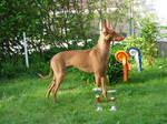 Собака чирнеко дель этна на траве