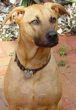 Портрет собаки combai
