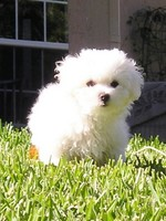 Симпатчный щенок Аиди