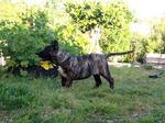 Симпатичный уругвайский симаррон во дворе
