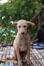 Симпатичная собака Jonangi