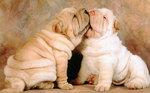 Симпатичные собаки шарпей