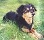 Симпатичная малая греческая собака