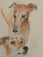 Нарисованные собаки грейхаунд
