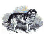 Нарисованная индийская собака hare