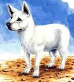 Нарисованная гавайская собака Пои