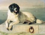 Нарисованная собака ландсир