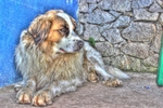 Нарисованная собака мукучиес
