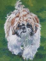 Нарисованная собака ши-тцу