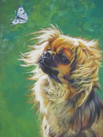 Портрет тибетского спаниеля