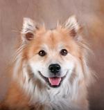 Портрет собаки эло
