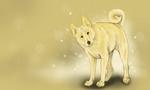Серая ханаанская собака