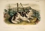Индийская собака hare на горе