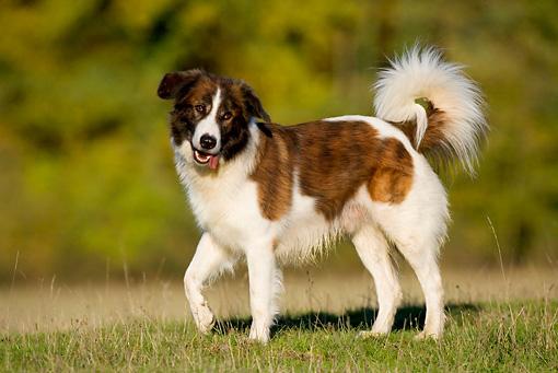 Прекрасная собака