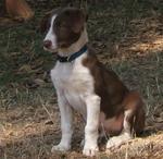 Прекрасная собака МакНаб
