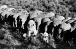 Старое черное-белое фото акбаша