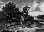 Собака породы староанглийский терьер