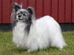 Собака фален на траве