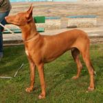 Фараонова собака с хозяином