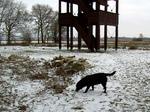 Польская охотничья собака в снегу