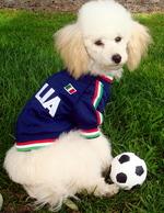 Пудель-футболист