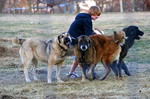 Три собаки гампр