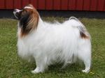 Собака фален смотрит