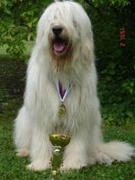 Южнорусская овчарка-победитель