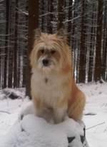 Зимнее фото собаки эло