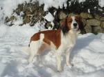 Зимнее фото собаки коикерхондье