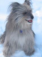 Зимнее фото пиренейской овчарки