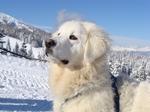 Зимнее фото словацкого чувача